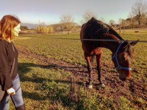 Dove andare a cavallo in maremma